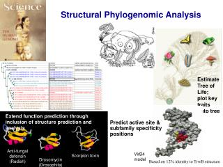Structural Phylogenomic Analysis