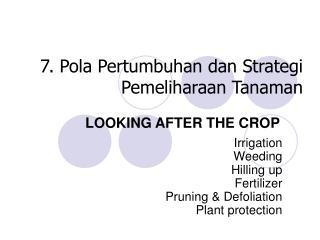 7. Pola Pertumbuhan dan Strategi Pemeliharaan Tanaman