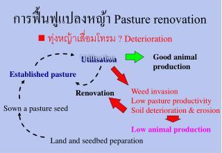 Pasture renovation