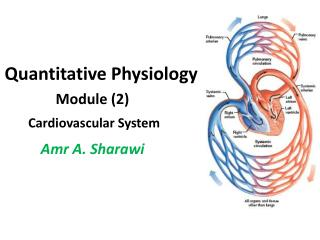 Quantitative Physiology