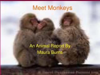 Meet Monkeys