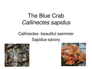 The Blue Crab Callinectes sapidus