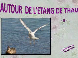 AUTOUR  DE LETANG DE THAU