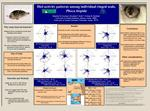 Diel activity patterns among individual ringed seals, Phoca hispida  Daniella M. Swenton1, Brendan P. Kelly1,2, Oriana R