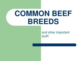 COMMON BEEF BREEDS