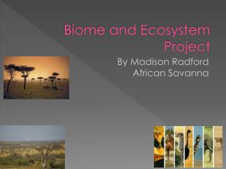 Biome and Ecosystem Project