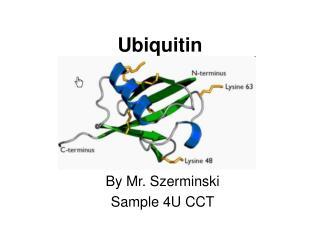 Ubiquitin