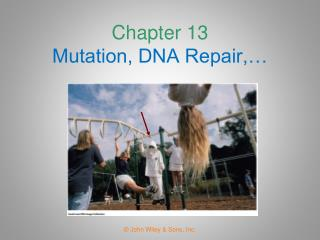 Chapter 13 Mutation, DNA Repair, and Recombination