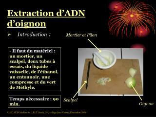 Extraction d ADN d oignon