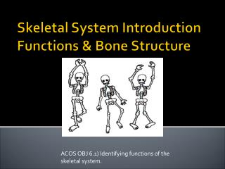 ACOS OBJ 6.1 Identifying functions of the skeletal system.