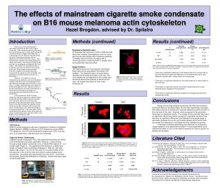 The effects of mainstream cigarette smoke condensate on B16 mouse melanoma actin cytoskeleton Hazel Brogdon, advised by