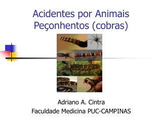 Acidentes por Animais Pe onhentos cobras