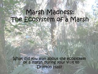 Marsh Madness: The Ecosystem of a Marsh