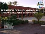 RESISTENCIA DE FRIJOL YORIM N AL AFIDO NEGRO, Aphis craccivora Koch