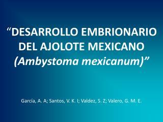 DESARROLLO EMBRIONARIO DEL AJOLOTE MEXICANO Ambystoma mexicanum    Garc a, A. A; Santos, V. K. I; Valdez, S. Z; Valero,