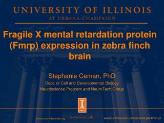 Fragile X mental retardation protein Fmrp expression in zebra finch brain