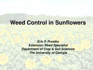 Weed Control in Sunflowers   Eric P. Prostko Extension Weed Specialist Department of Crop  Soil Sciences The University