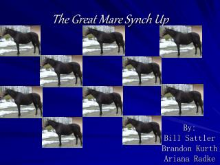 The Great Mare Synch Up