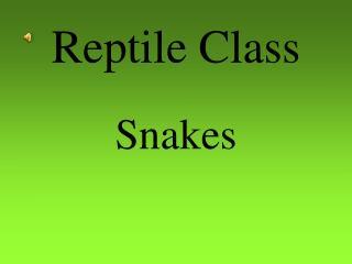 Reptile Class