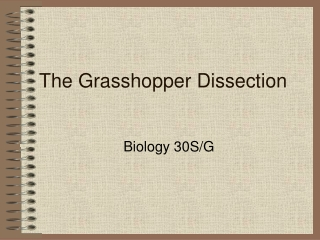 The Grasshopper Dissection