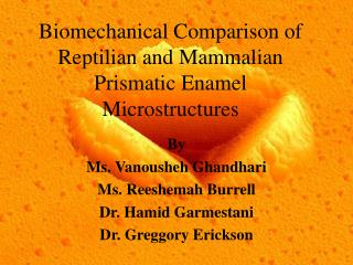 Biomechanical Comparison of Reptilian and Mammalian Prismatic Enamel Microstructures