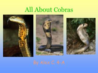 All About Cobras