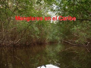 Manglares en el Caribe