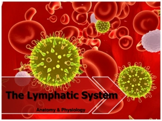 Introduction to Immunology  Lymphoid System