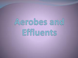 Aerobes and Effluents