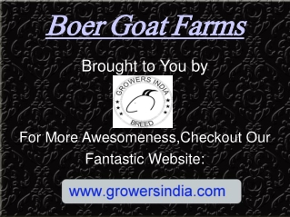 Boer Goat Farms
