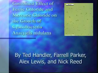 Combined Effect of Ferric Chloride and Mercuric Chloride on the Growth of Cyanobacteria Anacystis nidulans