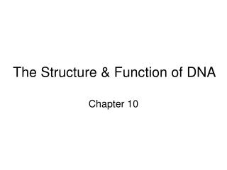 The Structure  Function of DNA