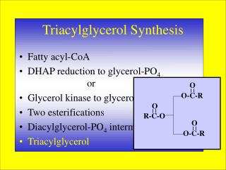 Triacylglycerol Synthesis