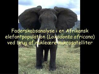 Faderskabsanalyse i en Afrikansk elefantpopulation Loxodonta africana ved brug af nukle re mikrosatelliter