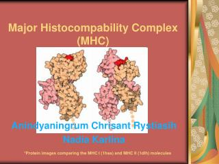 Major Histocompability Complex MHC