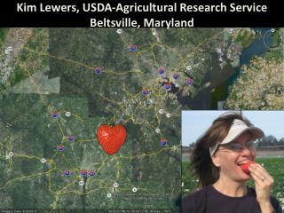 Kim Lewers, USDA-Agricultural Research Service  Beltsville, Maryland