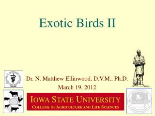 Exotic Birds II