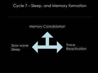 Cycle 7   Sleep, and Memory formation