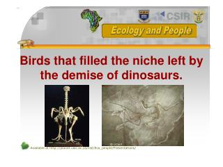 Birds that filled the niche left by the demise of dinosaurs.