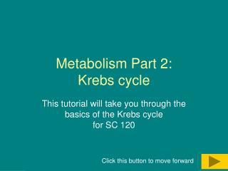 Metabolism Part 2:  Krebs cycle