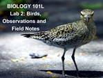 BIOLOGY 101L Lab 2: Birds,  Observations and  Field Notes
