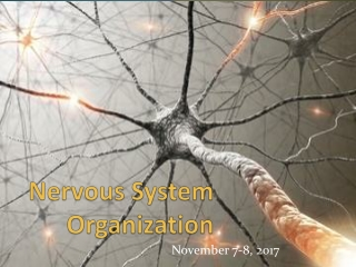 UNIT 10 The Central Nervous System CNS