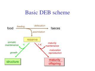 Basic DEB scheme