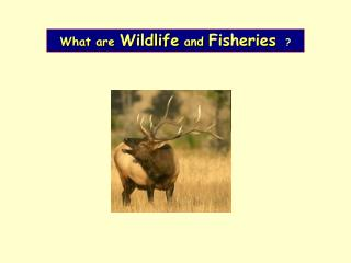 What are Wildlife and Fisheries