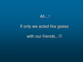 Ah...  If only we acted like geese  with our friends...