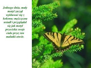 Jednego dnia, maly motyl zaczal wykluwac sie z kokonu; mezczyzna usiadl i przygladal sie jak motyl przeciska swoje cialo
