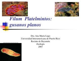 Filum  Platelmintos:  gusanos planos