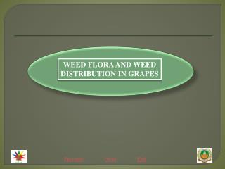 WEED FLORA AND WEED DISTRIBUTION IN GRAPES