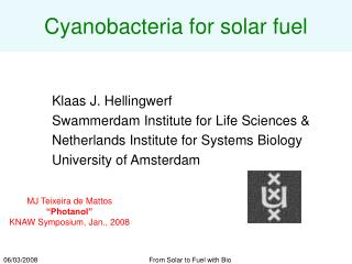 Cyanobacteria for solar fuel