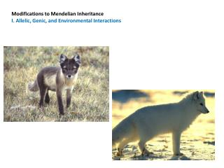 Modifications to Mendelian Inheritance I. Allelic, Genic, and Environmental Interactions